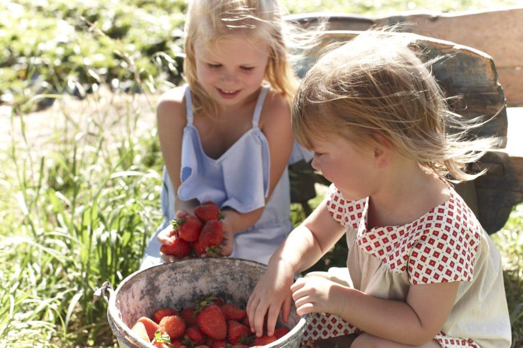 girls-picking-strawberries